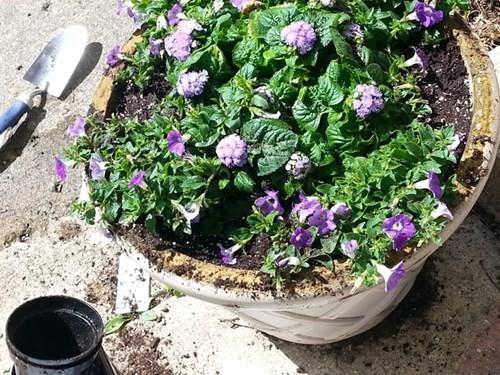 Flowers planted by volunteers